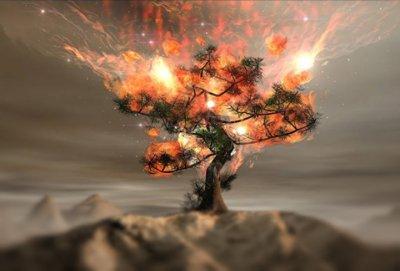 burningbush