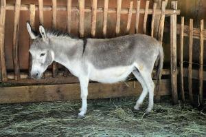 donkey-316467_1280