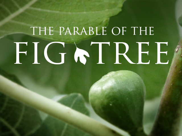 Pinchas The Parable Of The Fig Tree Ladder Of Jacob